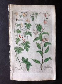 Hill & Culpeper 1792 HCol Botanical Print. Common White Bryony, Strawberry Tree